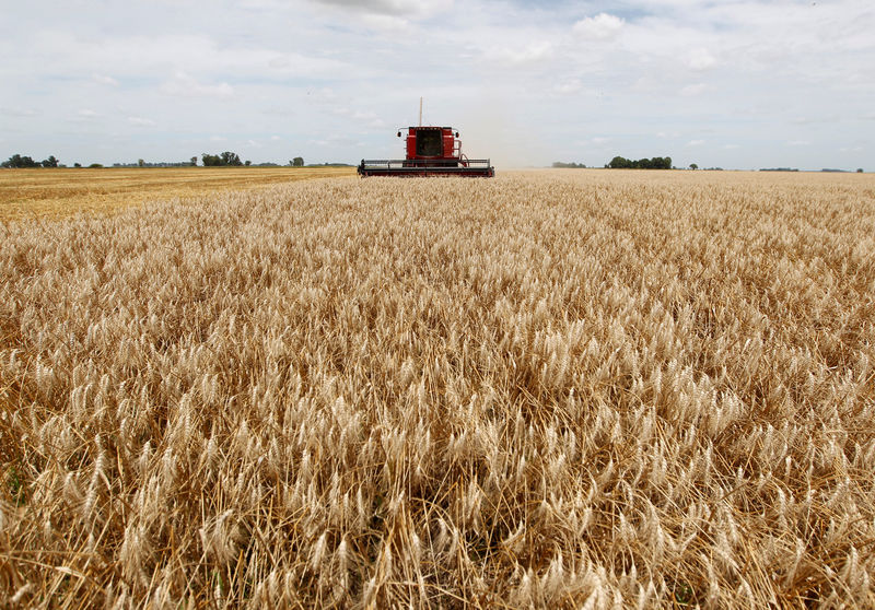 Asian millers turn to Argentina for wheat as drought hits Australian output