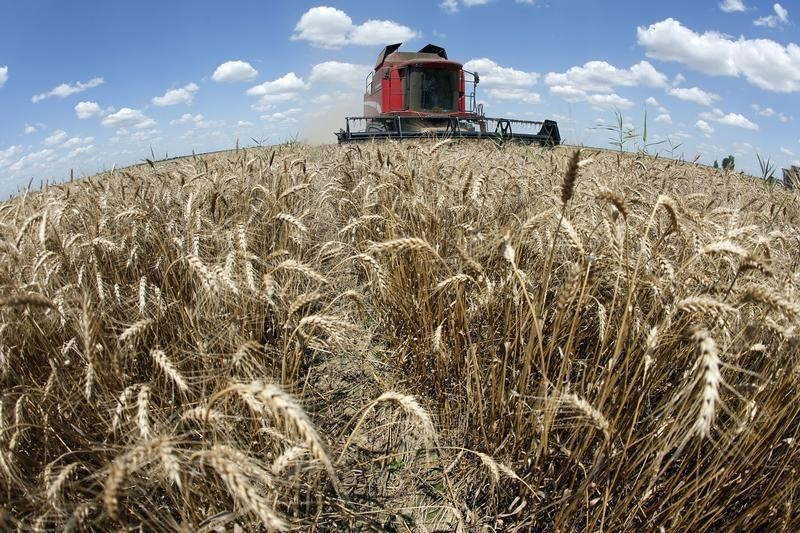 Bumper wheat harvest may ignite Argentina economy