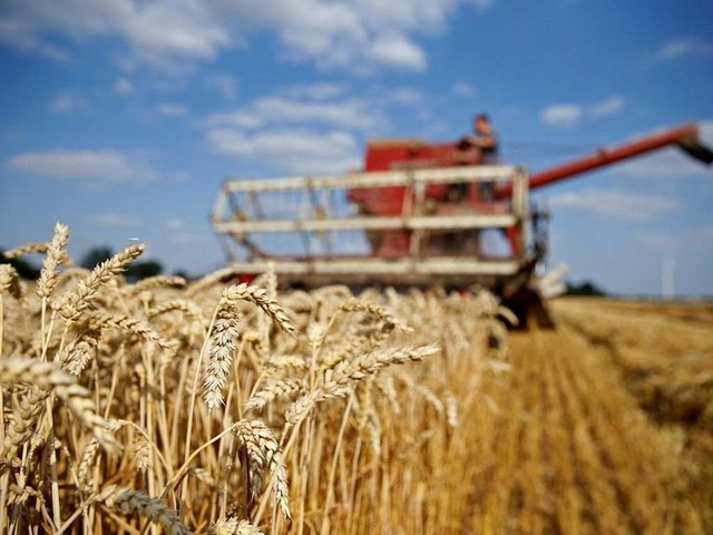FMPAC urges govt to launch 'Grow More Wheat Campaign'