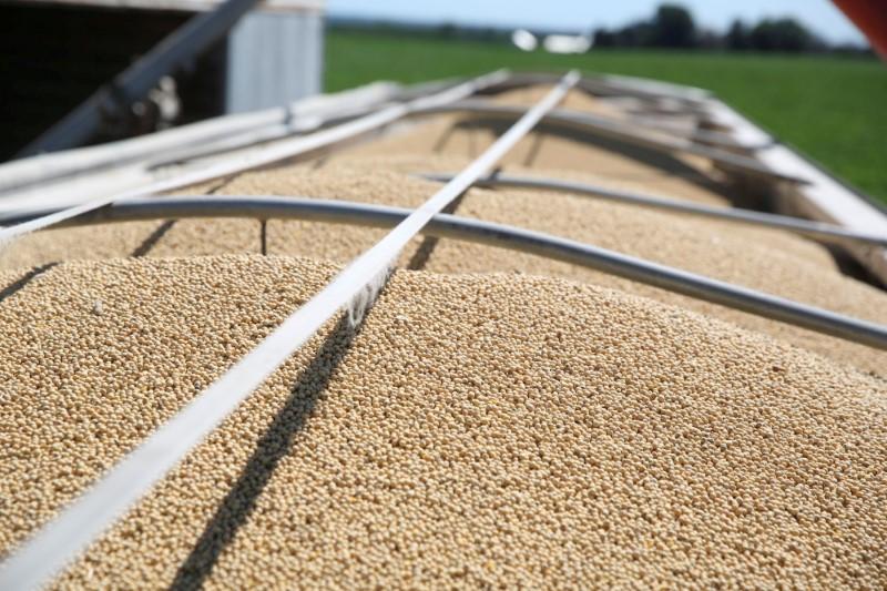 'Hi, I'm a soybean': In trade war, China deploys cartoon legume to reach U.S. farmers