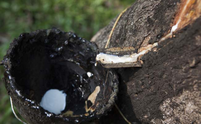 India: Draft rubber policy seeks to push exports, protect livelihoods