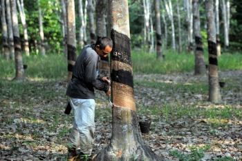 ITRC, not very successful in stabilising rubber prices: Datu Nasrun