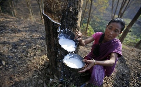 Price fall, production cost and politics drive last nail in the rubber plantation coffin of Kerala