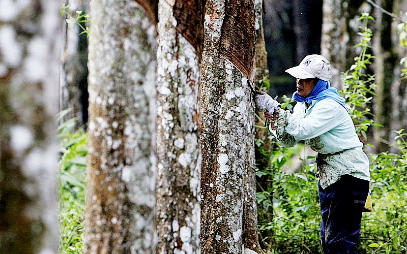 Rubber industry has lost its bounce, admits minister