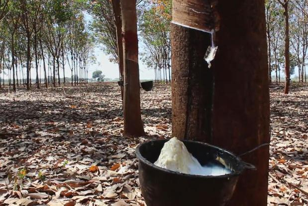 Thailand 'serious' on shoring up rubber prices