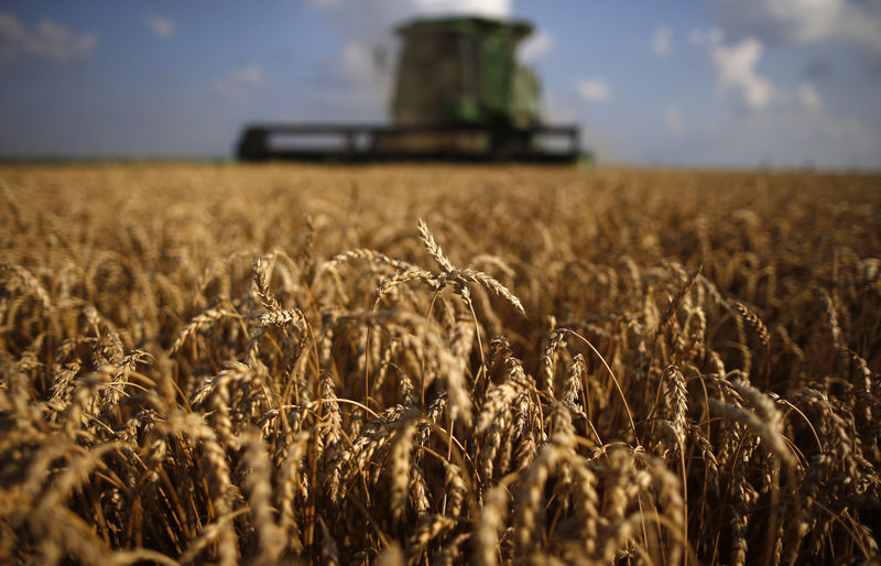 U.S. farm exports to China seen down 6 percent in fiscal 2019 vs. 2018: USDA