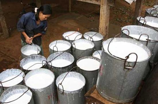 Vietnam: Rubber export tariffs may be cut