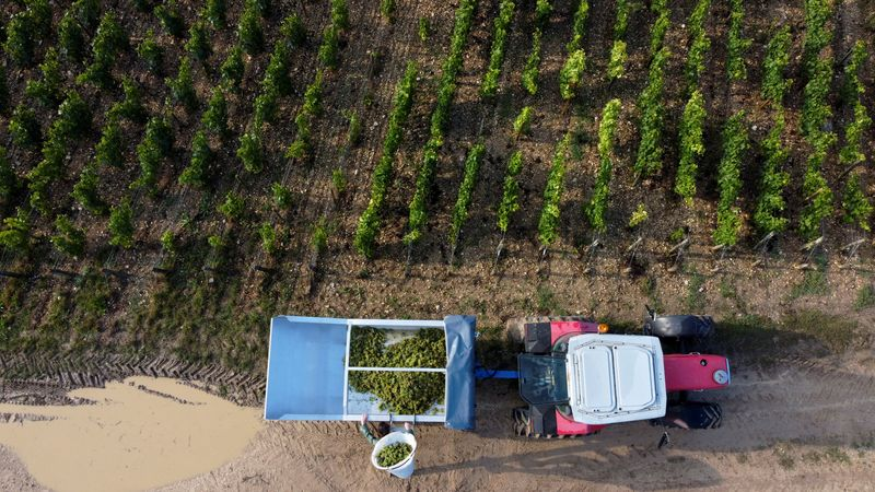 EU to extend support for wine, fruit and vegetable sectors