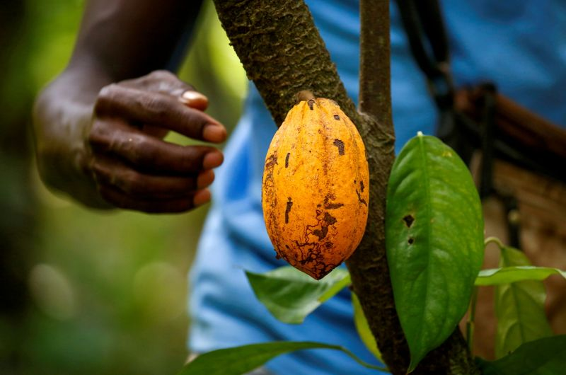 Ivory Coast caps local firms' share of cocoa exports, say sources