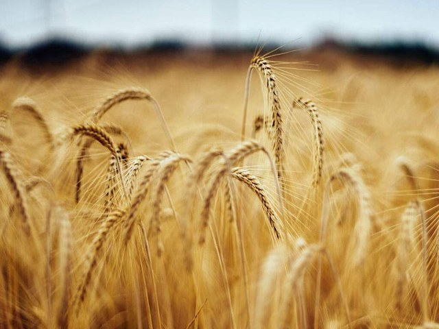 Wheat holds firm on global demand; corn, soy turn higher